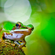 Tree Frog Poster by Albert Tan photo
