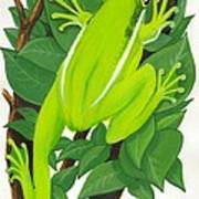Tree Frog At Rest Poster