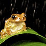 Tree Frog In Rain Poster by MarkBridger