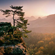 Tree In Morning Llght In Saxon Switzerland Poster