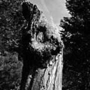 Tree Key Hole 1 Poster