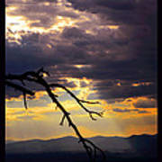 Tree Limb In Sunset Poster