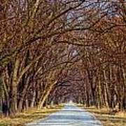Tree Lined Lane Poster