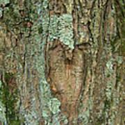 Tree Love Poster
