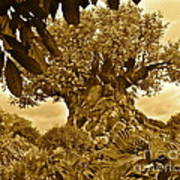 Tree Of Life In Sepia Poster