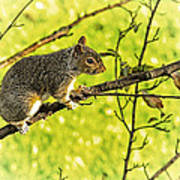 Tree Visitor Poster
