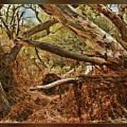 Tree Woods Poster