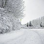 Trees And Dirt Path In Snowy Landscape Poster