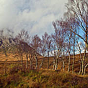 Trees Below Stob Dearg Poster by Gary Eason