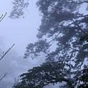 Trees In Fog 3  Poster