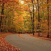 Trees Of Autumn - Holmdel Park Poster