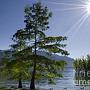 Trees With Sunbeam Poster