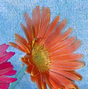 Triptych Gerbera Daisies-three Poster