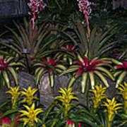 Tropical 1 Poster by Wanda J King