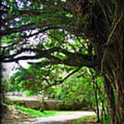 Tropical Banyan Path Poster