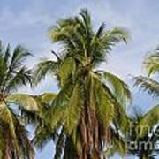 Tropical Cliche Poster