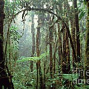 Tropical Cloud Forest Poster