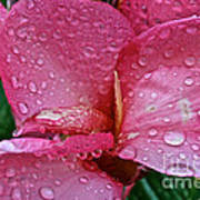 Tropical Rose Poster by Susan Herber