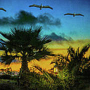Tropical Sunset With Pelicans Poster