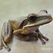 Tropical Tree Frog II Poster
