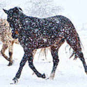 Trotting In The Snow Poster