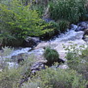 Trout Creek Poster