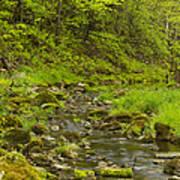 Trout Run Creek 4 Poster