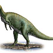 Tsintaosaurus Spinorhinus Poster