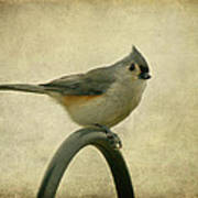 Tufted Titmouse II Poster