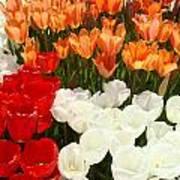 Tulip Flowers Festival Art Prints Floral Baslee Poster