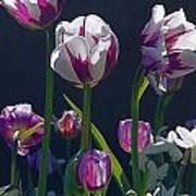 Tulip Springtime Memories Poster