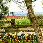 Tulip Time In The Skagit Valley Poster