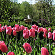 Tulips And Fountain Poster