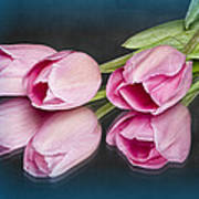 Tulips And Reflections Poster