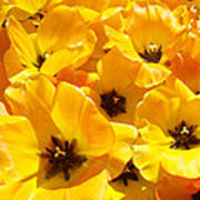 Tulips Art Prints Yellow Tulip Flowers Floral Poster