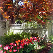 Tulips By Dappled Fence Poster