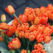 Tulips Poster by Leslie Leda