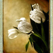 Tulips Side Sepia Poster