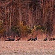 Turkey - Wild Turkey - Seventeen Longbeards Poster