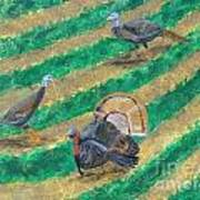 Turkeys In Field Poster