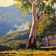 Turon Gum Tree Poster