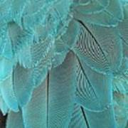 Turquoise Blue Feathers Poster
