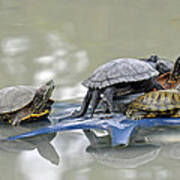 Turtle Pileup Poster