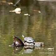 Turtle Print Poster
