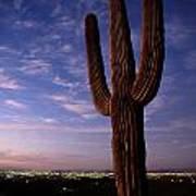 Twilight View Of A Saguaro Cactus Poster