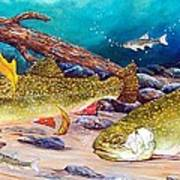 Two Brook Trout Poster