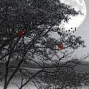 Two Cardinals In The Moonlight Poster