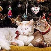 Two Cats At Christmas Poster