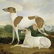 Two Greyhounds In A Landscape Poster