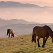 Two Horses Grazing On Mountain Top In Early Mornin Poster
